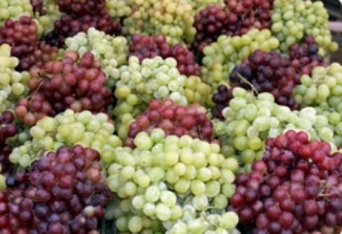 Uva di puglia - Red globe uva da tavola ...