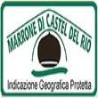 MARRONE DI CASTEL DEL RIO