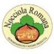 NOCCIOLA  ROMANA