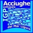 ACCIUGHE SOTTO SALE DEL MAR LIGURE
